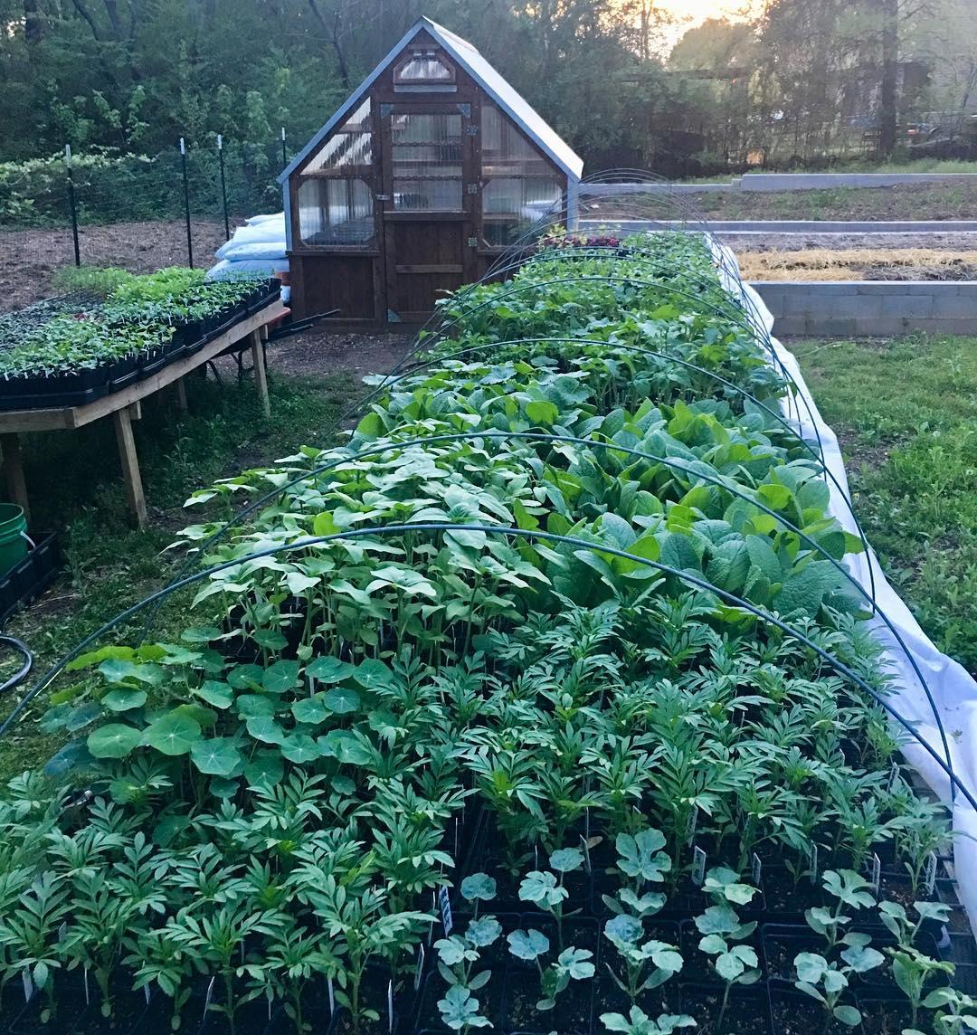 Cô gái trẻ trồng cả vườn rau và hoa theo phương pháp hữu cơ vì yêu thích sống trong không gian xanh - Ảnh 5