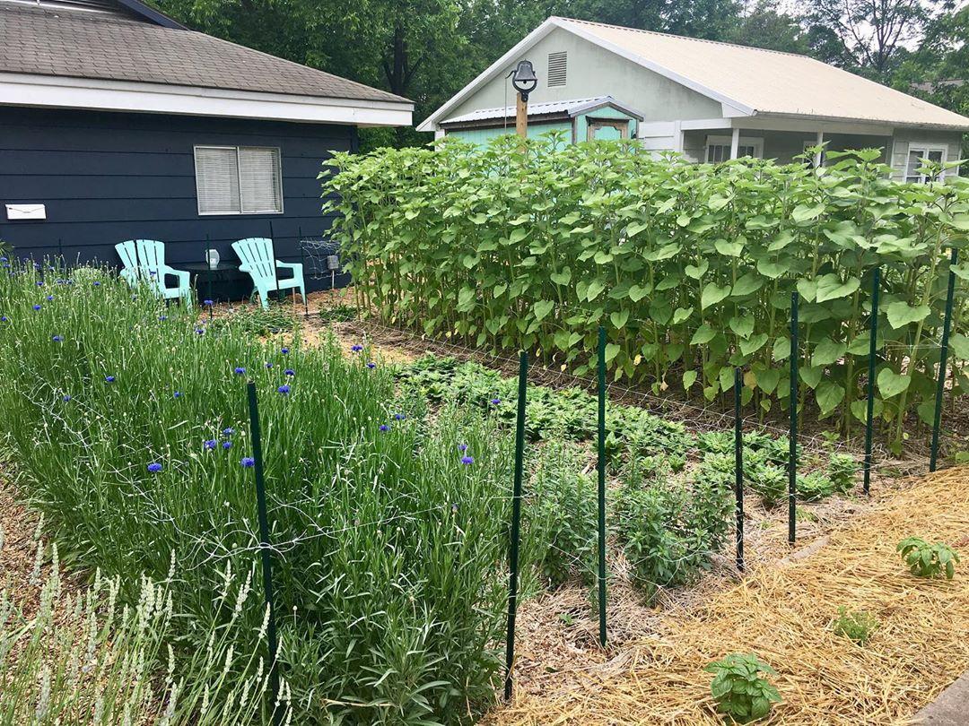 Cô gái trẻ trồng cả vườn rau và hoa theo phương pháp hữu cơ vì yêu thích sống trong không gian xanh - Ảnh 7