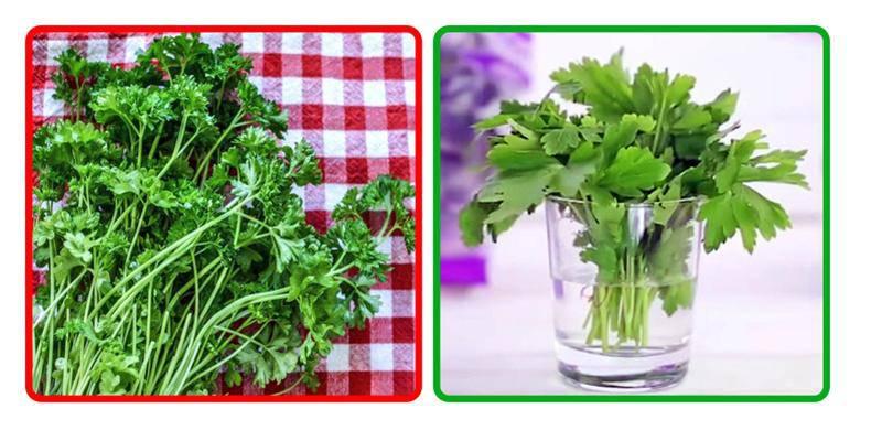 Những mẹo bảo quản rau củ quả để nhiều ngày chẳng hỏng, đỡ tốn công đi mua - Ảnh 5