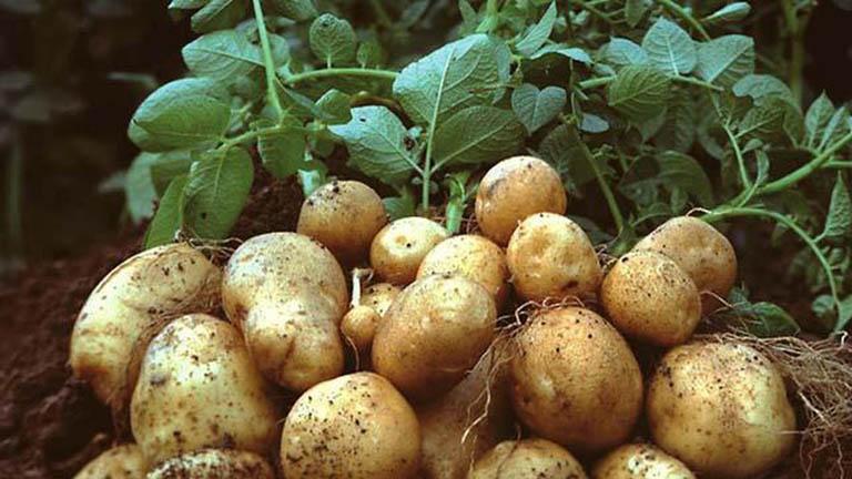 10 thực phẩm vàng 'tốt hơn ngàn viên thuốc' dành cho người huyết áp cao  - Ảnh 3