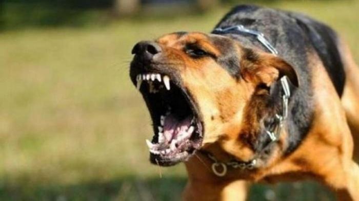 Bị chó cắn, thiếu niên 17 tuổi tử vong sau 5 ngày - Ảnh 1