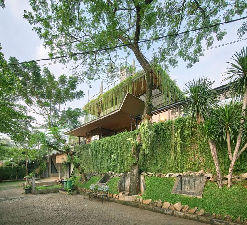 Ngôi nhà phủ kín cây xanh như bước ra từ câu chuyện cổ tích - Ảnh 1