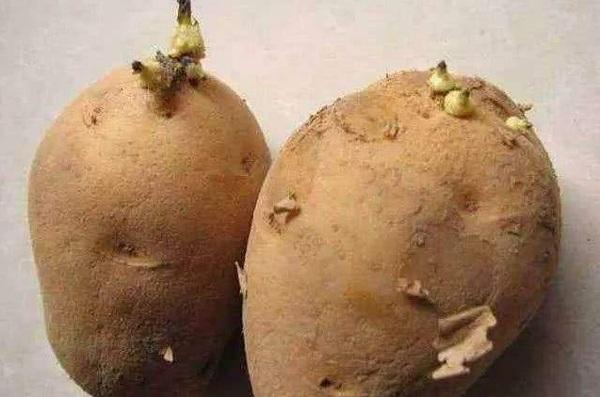 5 loại rau cần bỏ ăn vì độc chết người, ăn lượng nhỏ cũng có thể gây ung thư - Ảnh 1