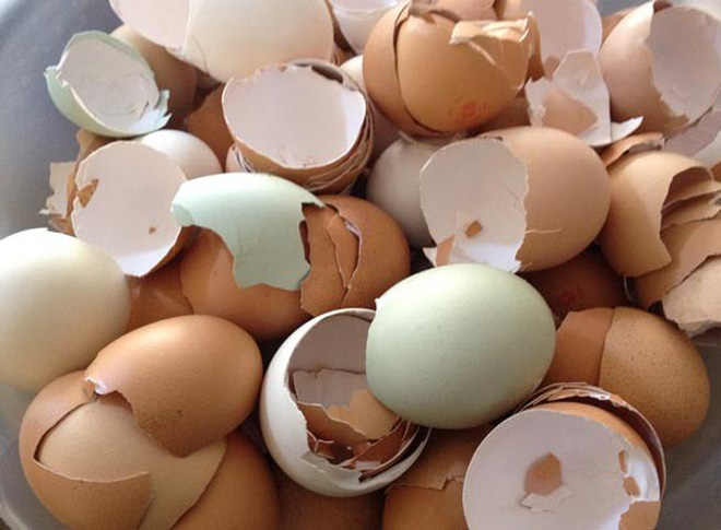 Biết 10 công dụng thần kỳ của vỏ trứng, bạn sẽ không bao giờ vứt chúng vào thùng rác - Ảnh 1