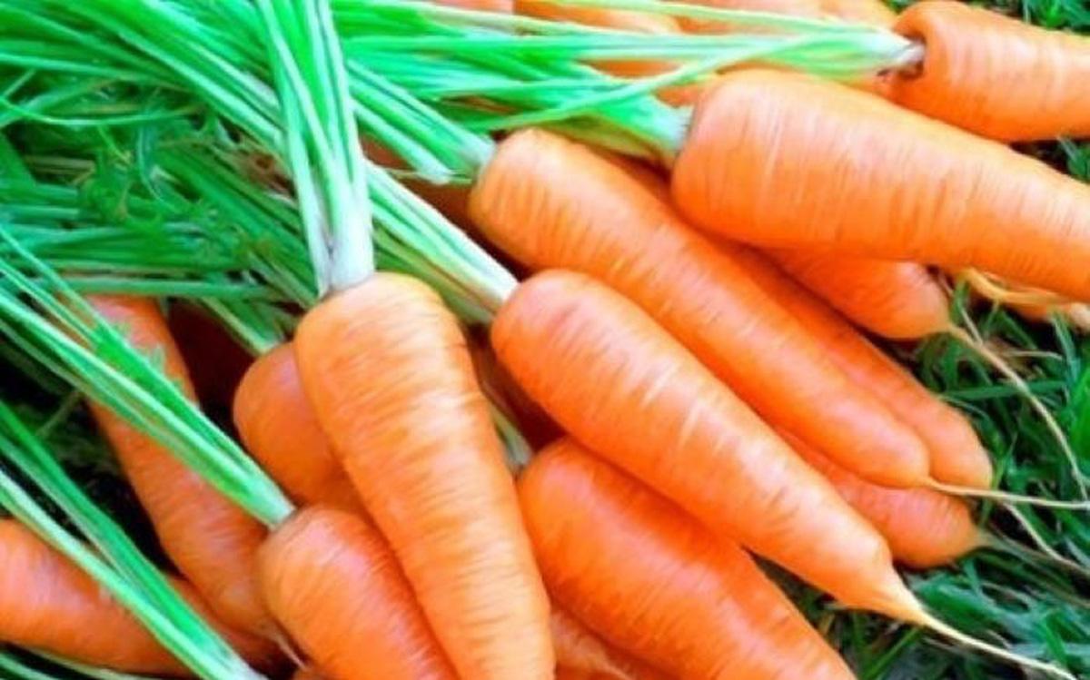 Cà rốt bổ dưỡng - 'sâm của nhà nghèo' - Ảnh 1