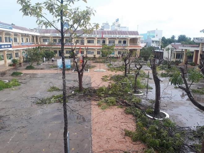 Nhiều trường chặt hạ hàng loạt cây phượng 'vô tội vạ', cộng đồng mạng xót xa - Ảnh 1