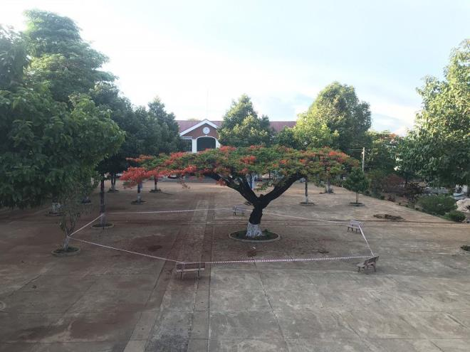 Nhiều trường chặt hạ hàng loạt cây phượng 'vô tội vạ', cộng đồng mạng xót xa - Ảnh 3