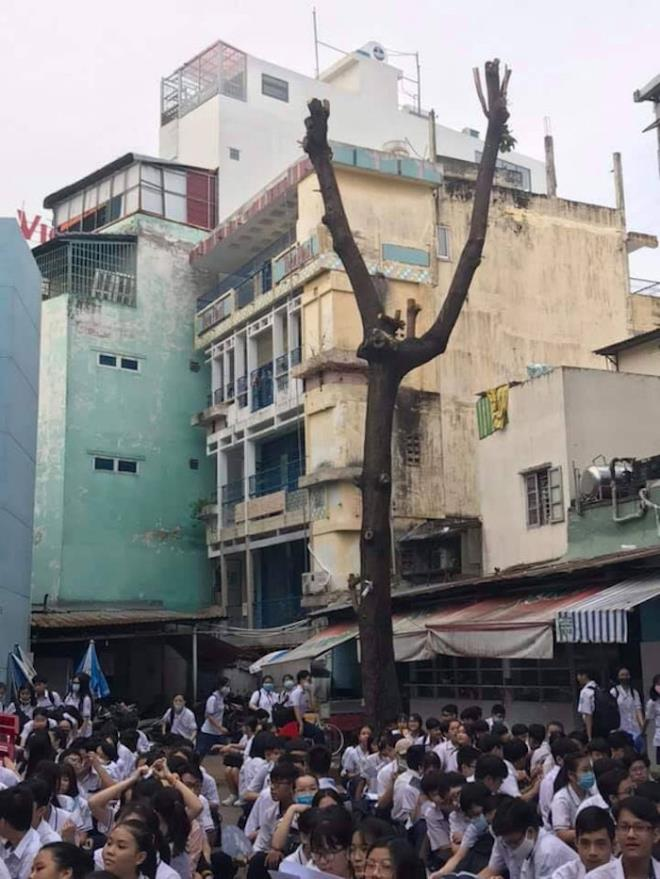 Nhiều trường chặt hạ hàng loạt cây phượng 'vô tội vạ', cộng đồng mạng xót xa - Ảnh 2