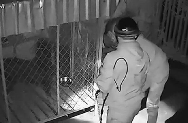 Đi trộm chó quý bị camera ghi hình nhờ người mang trả lại - Ảnh 1