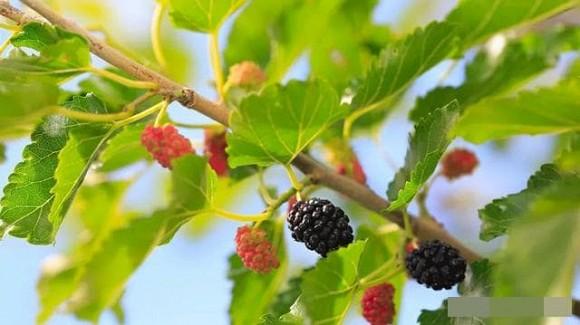 4 loại trái cây giảm béo phù hợp nhất để ăn ngay bây giờ, vừa giải độc tố vừa tẩy tế bào da chết - Ảnh 1