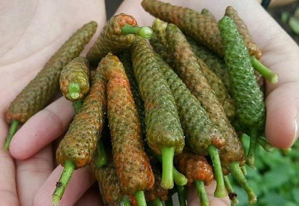 Món ăn vị thuốc tăng cường miễn dịch mùa dịch - Ảnh 2