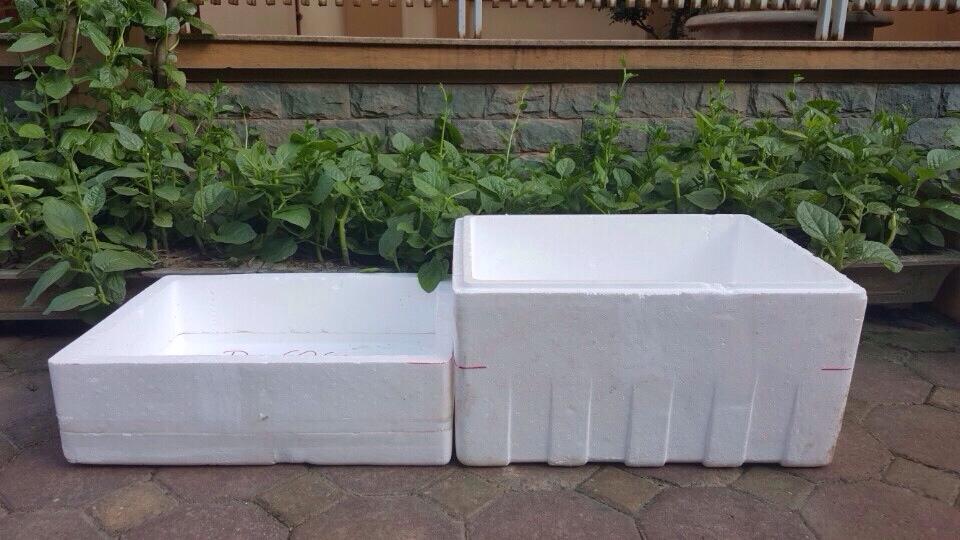 Mẹo trồng rau cải trong thùng xốp đơn giản, tiết kiệm chị em nào cũng làm được - Ảnh 1