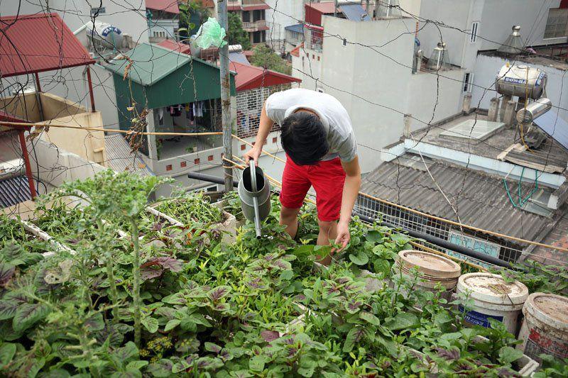 Mẹo trồng rau cải trong thùng xốp đơn giản, tiết kiệm chị em nào cũng làm được - Ảnh 3