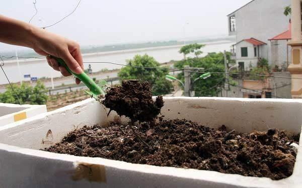 Mẹo trồng rau cải trong thùng xốp đơn giản, tiết kiệm chị em nào cũng làm được - Ảnh 2