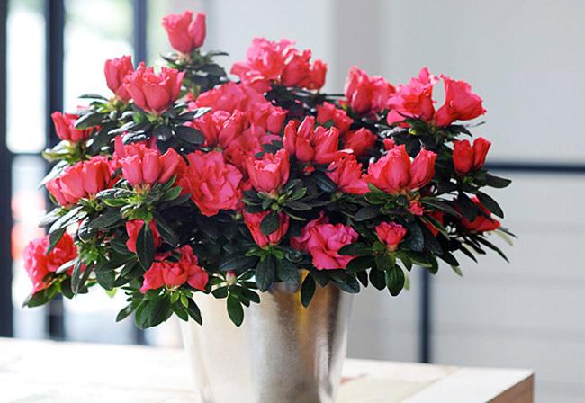 Tặng hoa gì cho Ngày của Mẹ sắp tới thêm ý nghĩa? - Ảnh 5