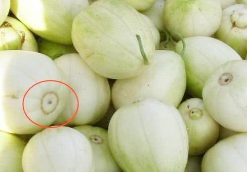 Khi mua dưa lê, nhìn vào rốn quả, thấy điều này chị em nhanh tay mua ngay kẻo hết - Ảnh 2