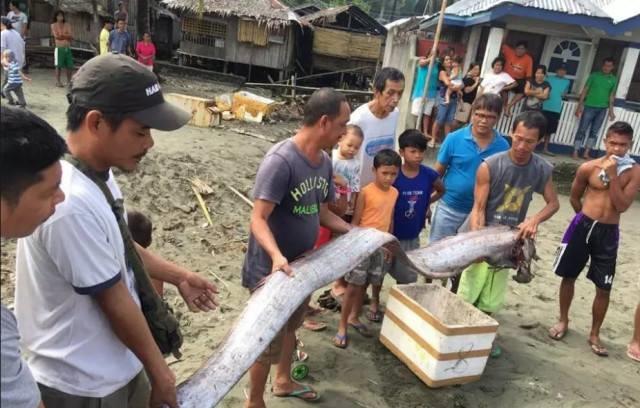 Nhặt xác thủy quái, cả làng hứng chịu thảm họa kinh hoàng sau 2 ngày - Ảnh 4