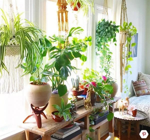 Ô cửa sổ sáng bừng, tràn đầy sức sống với những mẫu cây cảnh xanh mát.