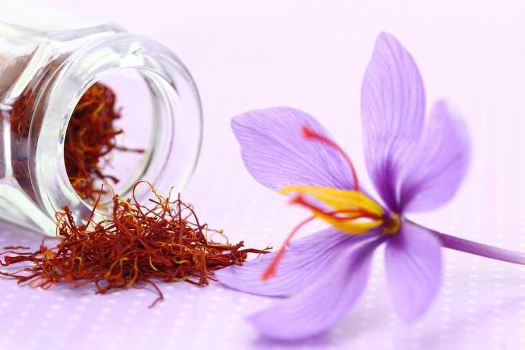 Nhụy hoa  nghệ tây là thảo dược rất tốt cho cơ thể