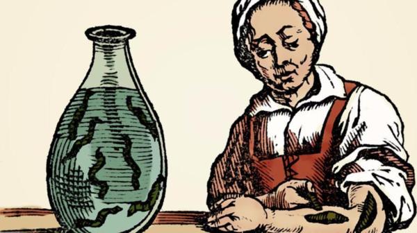 Liệu pháp dùng đỉa chữa bệnh trong y học cổ truyền - Ảnh 2