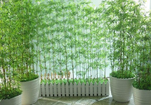 Trước nhà nên trồng tre, trúc để gặp nhiều vận may.