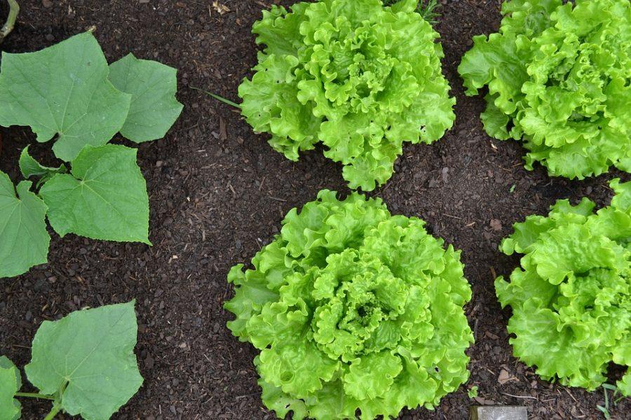 Khi nào nên bắt đầu cho trẻ ăn rau sống? - Ảnh 3