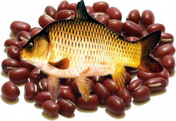 Dùng canh cá chép đậu đỏ còn tốt cho các trường hợp tiểu ít, tiểu buốt, người nóng, rêu lưỡi vàng nhớt