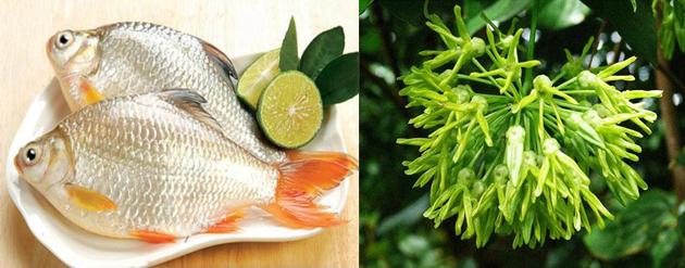Chữa mất ngủ hiệu quả với canh hoa thiên lý nấu cá diếc - Ảnh 2