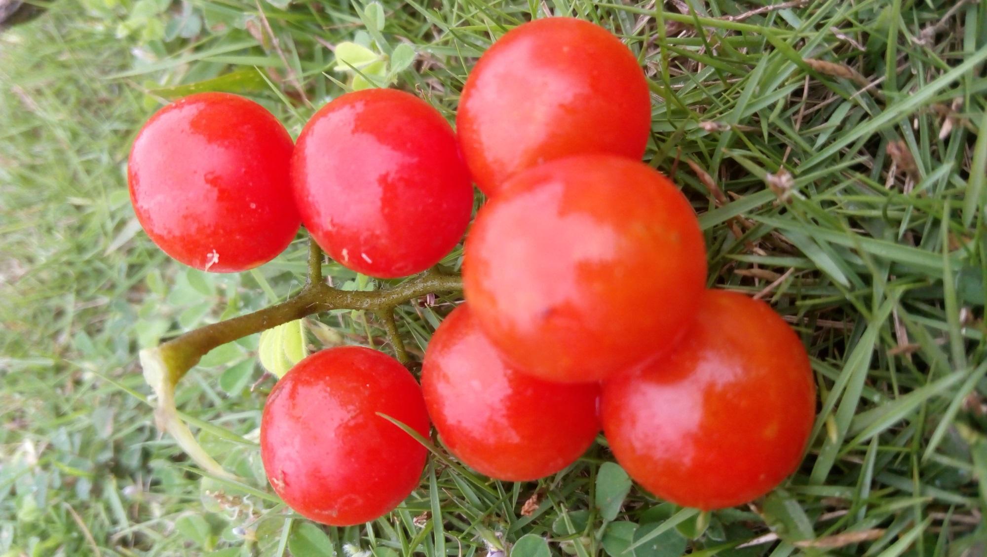 8 loại trái cây và rau không nên bảo quản trong tủ lạnh - Ảnh 1