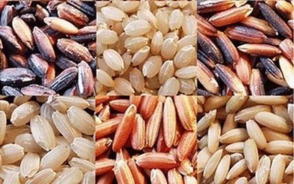 Gạo lứt kiện tỳ vị, dưỡng huyết - Ảnh 1