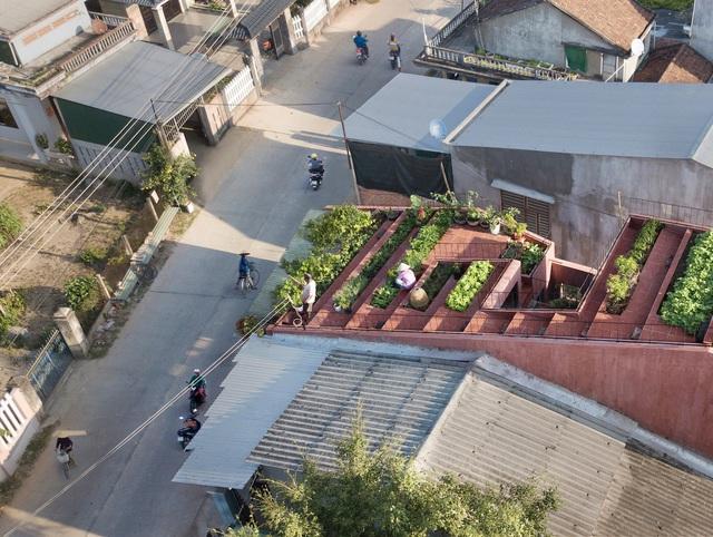 Mãn nhãn loạt biệt thự phố có 'vườn trên mây' tốt như nông trại - Ảnh 4