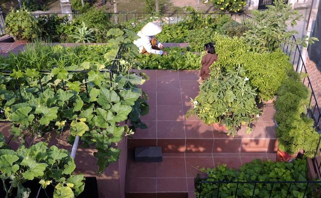 Mãn nhãn loạt biệt thự phố có 'vườn trên mây' tốt như nông trại - Ảnh 6
