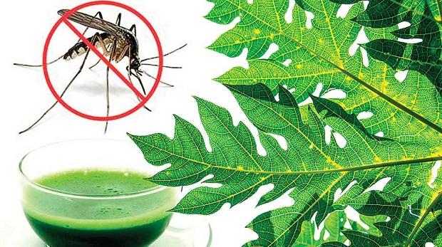 Lợi ích bất ngờ của lá đu đủ đối với sức khỏe, có thể chữa được nhiều loại bệnh trong đó có cả bệnh ung thư - Ảnh 2