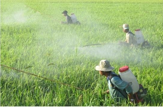 Bố phun thuốc diệt cỏ, thuốc trừ sâu có ảnh hưởng đến thai nhi không? - Ảnh 3