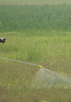 Bố phun thuốc diệt cỏ, thuốc trừ sâu có ảnh hưởng đến thai nhi không? - Ảnh 1