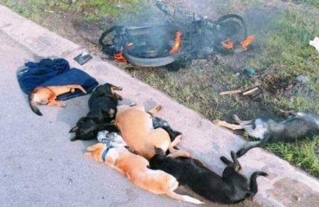 Trộm 5 con chó, 1 người bị đâm chết tại chỗ - Ảnh 1