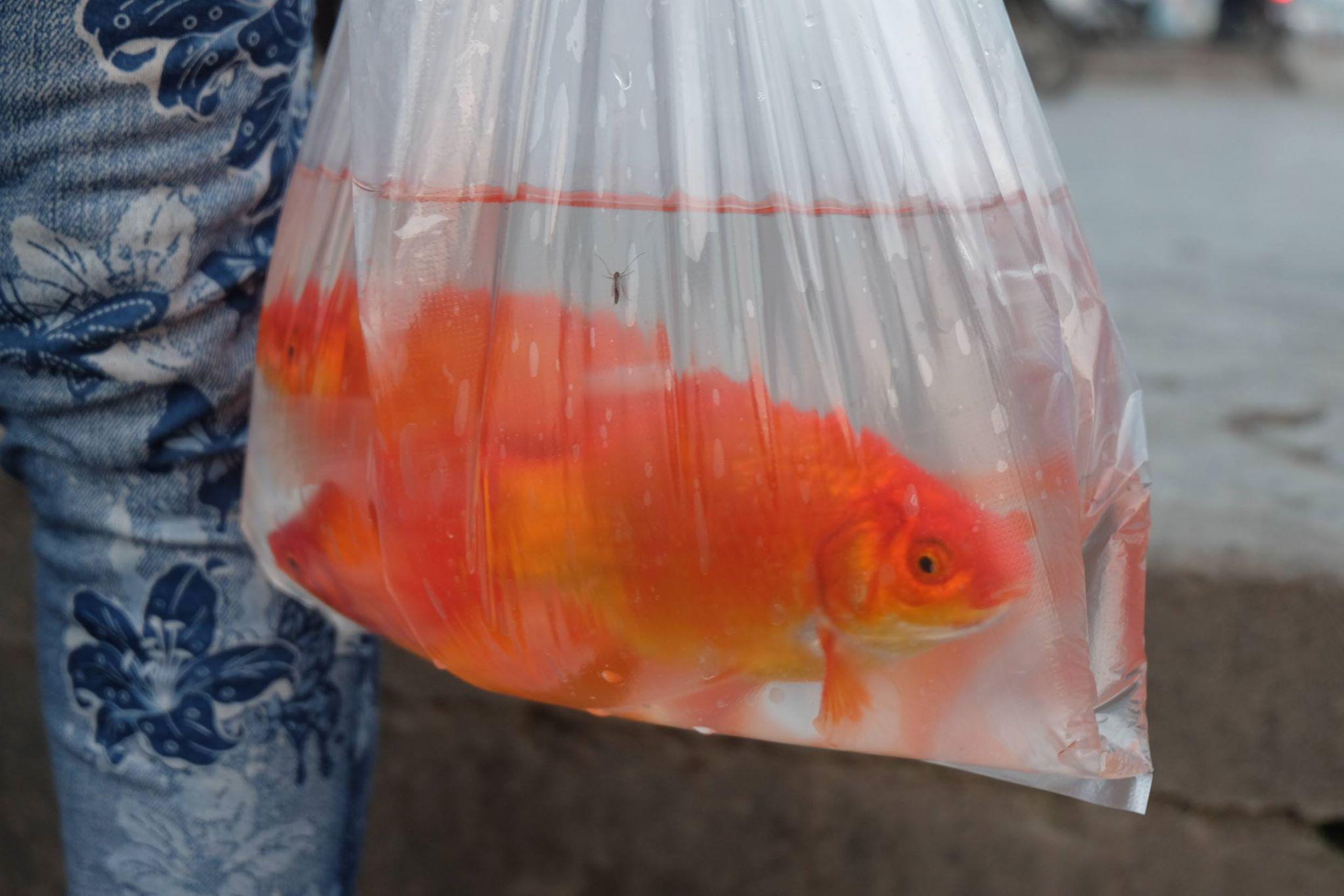 Nhiều người mang cá theo bằng túi nilon