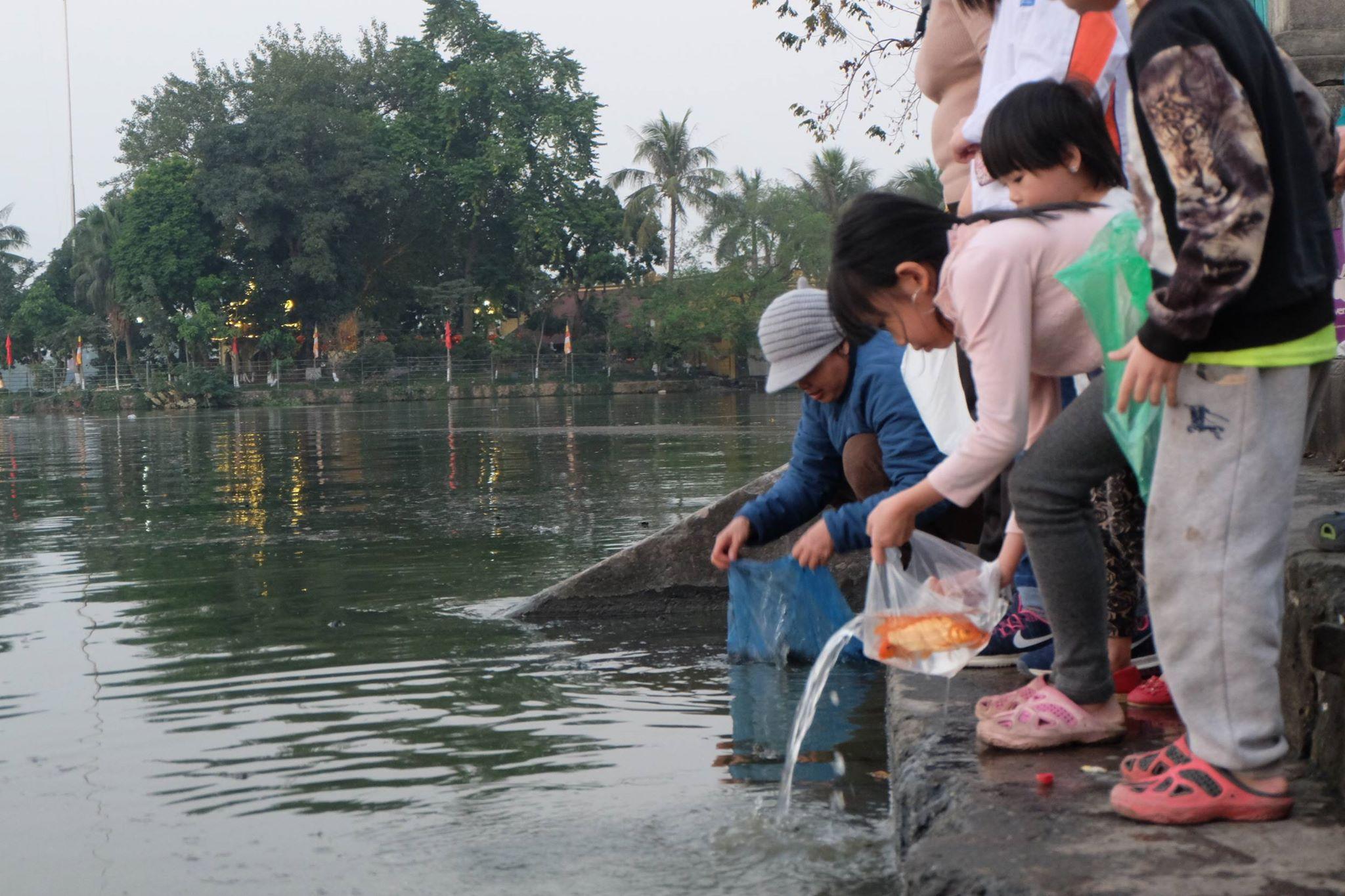 Hà Nội: Cá chép nhanh chóng 'chầu trời' sau khi bị thả xuống dòng nước ô nhiễm kinh hoàng - Ảnh 1