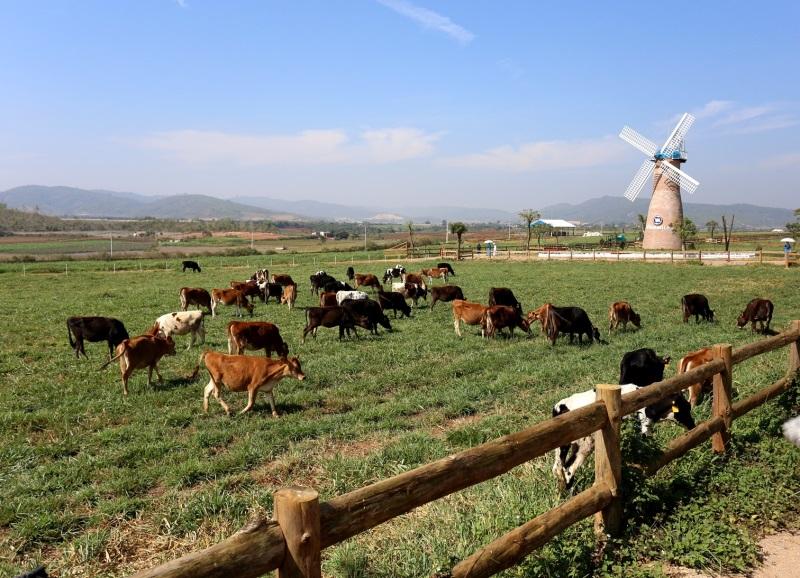 Vinamilk tiếp tục khẳng định vị trí dẫn đầu thị trường sữa tươi tại Việt Nam - Ảnh 3
