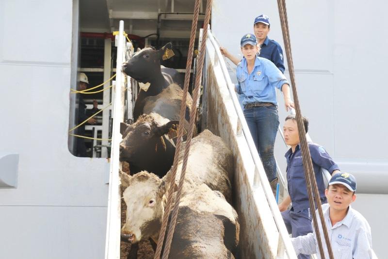 Vinamilk nhập hơn 2.000 con bò sữa cao sản từ Mỹ, tiếp tục khẳng định vị thế dẫn đầu ngành hàng sữa - Ảnh 5
